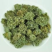 Panax-Noto-Ginseng-Flower-San-Qi-Hua