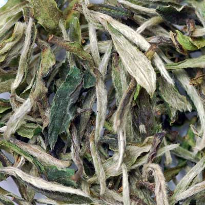 white tea leaves buy what is the best flavor